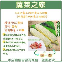 【蔬菜之家】G59.白龍王2號水果玉米10顆(北海道牛奶水果玉米種子)//春秋兩季的品種,抗病力強,甜度達到16-18度
