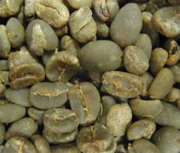 <四季咖啡生豆>3A級黃金曼特寧Golden Mandheling 生豆(新貨到)每公斤460元