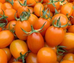 【10斤小蕃茄現貨供應中】產地直送小番茄,果甜肉脆又好吃  含箱重量:10台斤