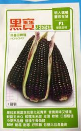【野菜部屋~】N13 黑寶甜珍珠玉米種子20 粒 , 黑糯玉米 , 甜,軟,嫩 , 每包12元 ~