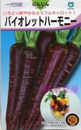 【野菜部屋~蔬菜種子】I25 日本紫金胡蘿蔔種子 35 粒 , 相當特別的品種 , 每包12元 ~